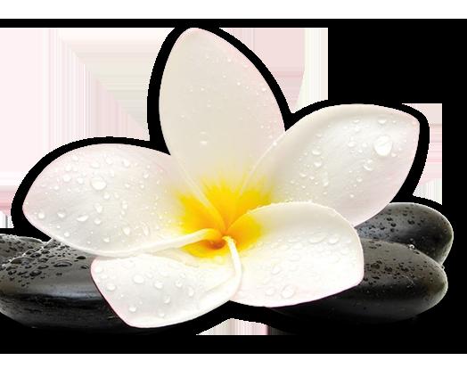 pierre et fleur de massage